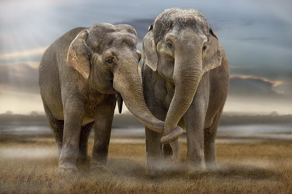 два слоника.jpg